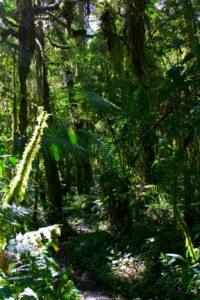 Sendero de los quetzales | Panama