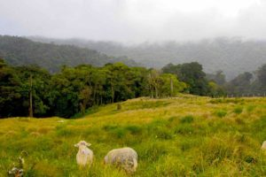 Début sendero de los quetzales depuis Boquete